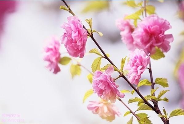 关于婚外恋---春来还发旧时花